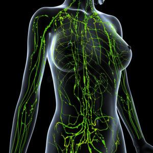 drainage lymphatique - parcours de la lymphe